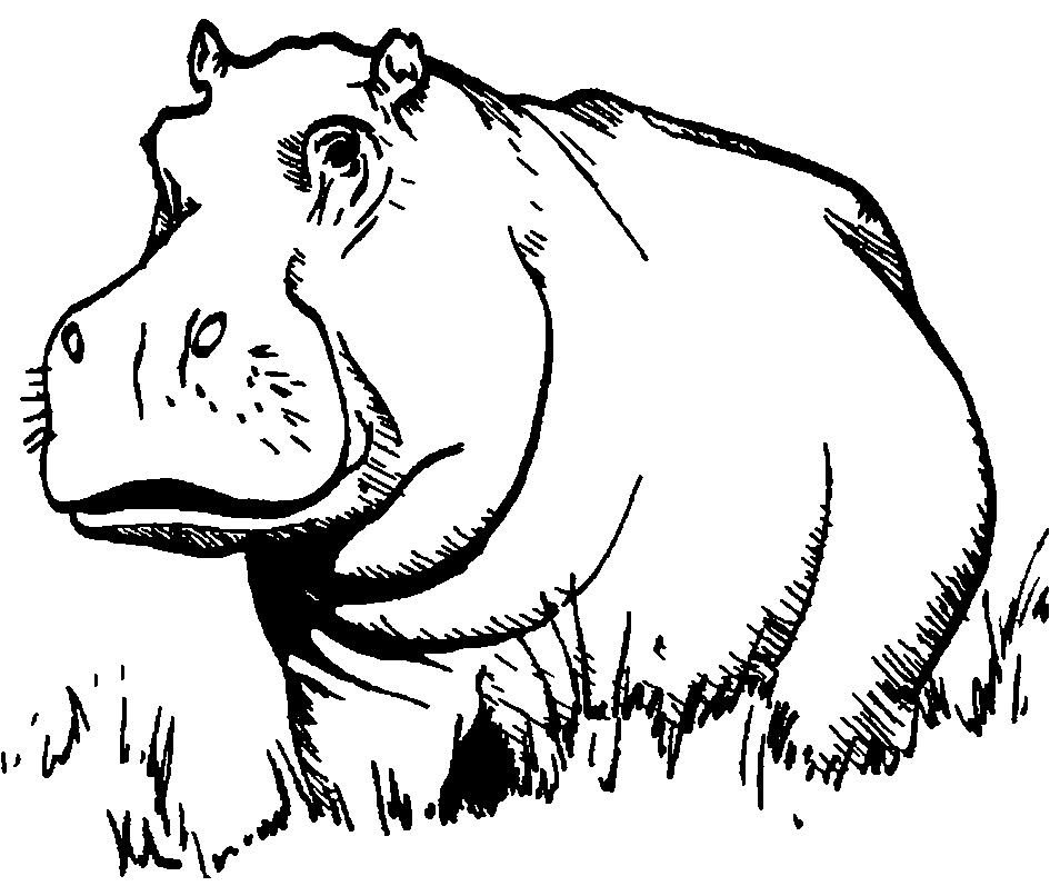Line Art Hippo : Lugwere dictionary search results